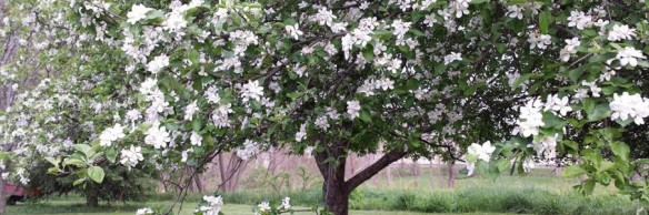 cropped-bloomimg-tree.jpg