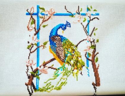 peacock sal 1