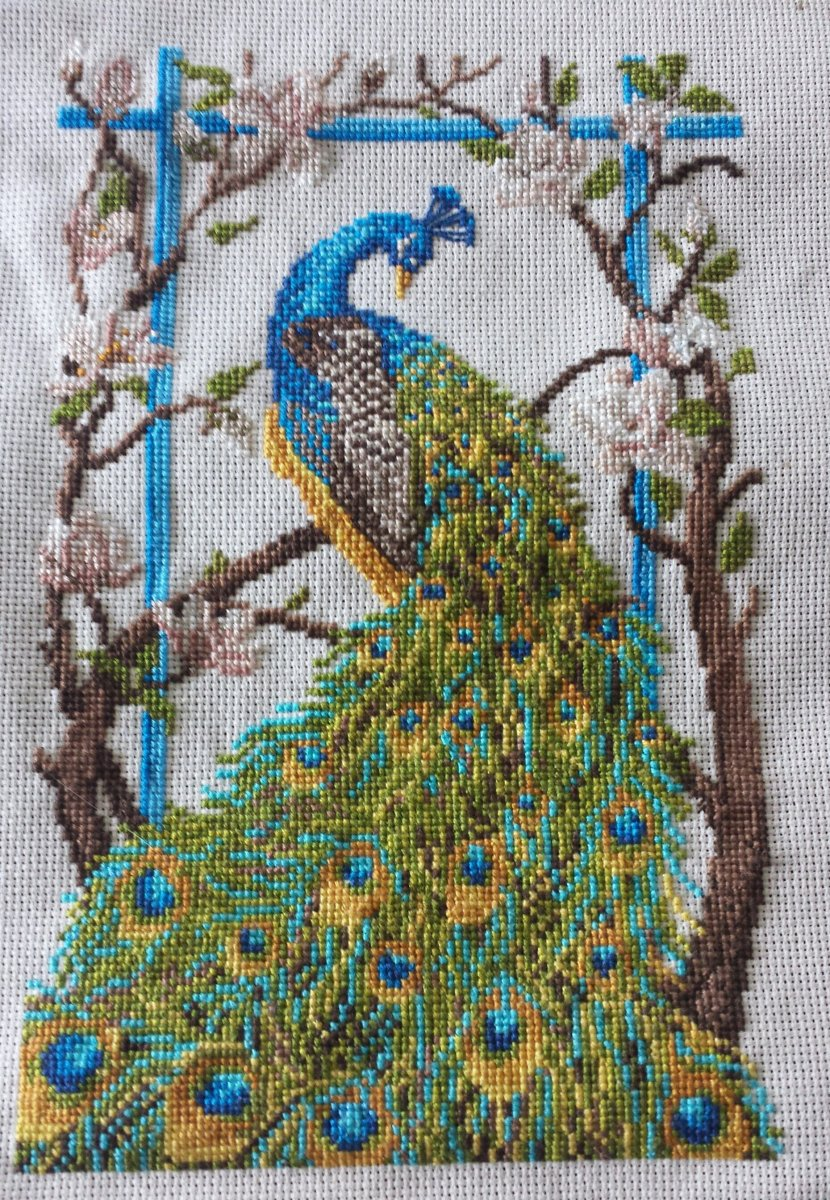 SAL Project Peacock Done!